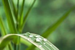 Bamboe extract