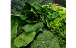 Greenfoods Plus