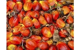 Rode Palmolie