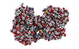 Lactoferrine 300 mg
