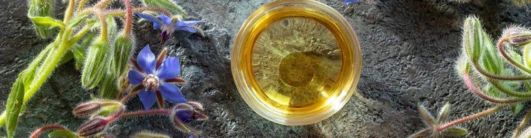Borage olie: rijk aan omega 6 (GLA)