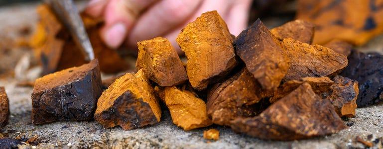 Chaga: diamant van het bos voor meer 'qi'