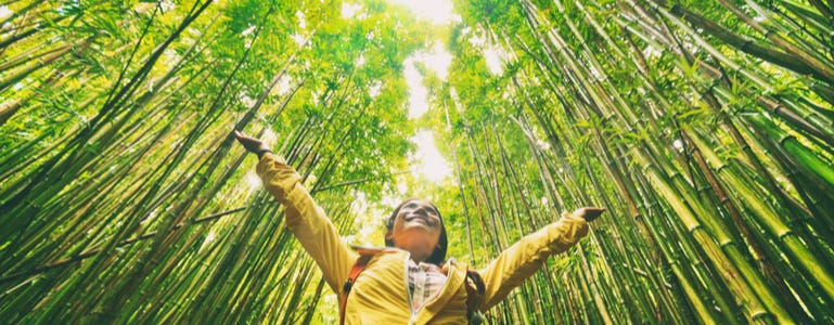 Bamboe: indrukwekkende bron van silicium