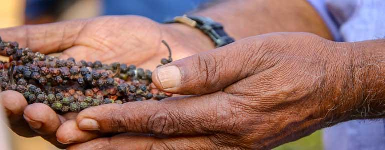 BioPerine® (zwarte peper extract) voor een betere opname
