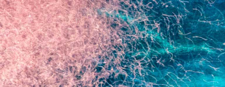 De unieke eigenschappen van krill olie