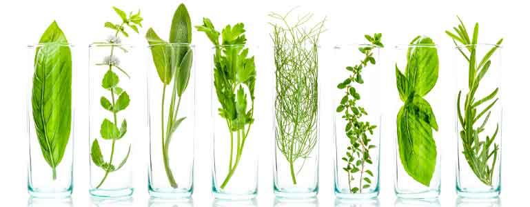 Wat zijn extracten in supplementen?