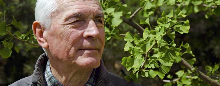 Het inspirerende levensverhaal van de oudste boom op aarde: Ginkgo biloba