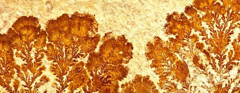 Prehistorische gezondheid met planten en kruiden