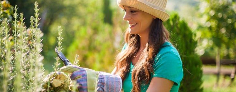 Rozemarijn: aromatisch kruid voor lever en afweersysteem