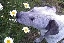 Hondje tussen bloemen