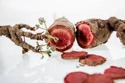 Pelargonium wortel