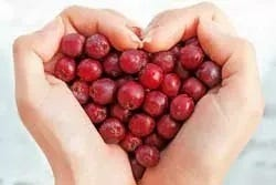 Meidoornbessen in hartvorm in handen