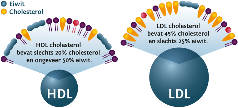 HDL- LDL