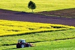 Monocultuur in landbouw