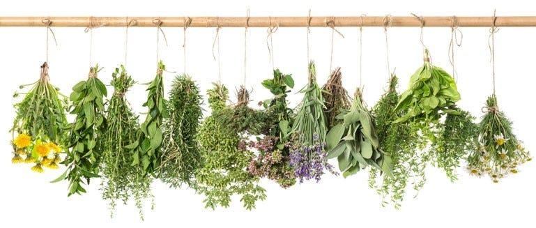 Krachtige groen kruiden