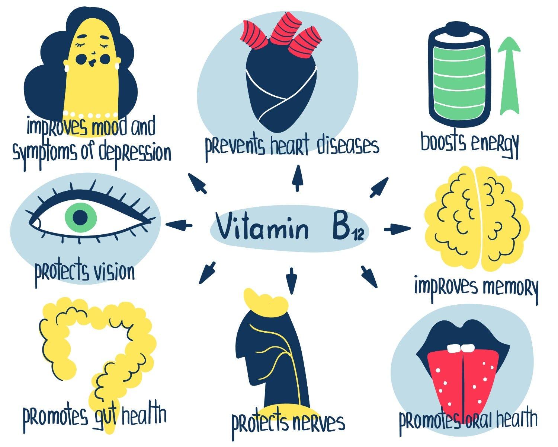 functies van vitamine B12 in het lichaam