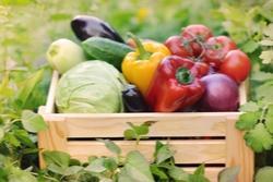 Kratje biologische groentes
