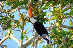De fauna van de Amazone