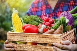 Kratje verse groenten