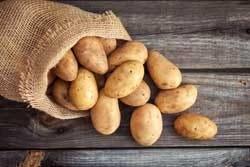 Aardappels zijn nachtschades