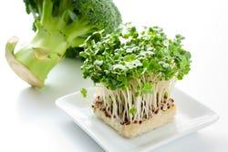 Broccoli spruiten