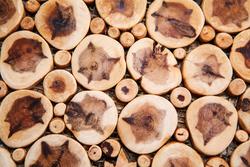 Jeneverbessenhout