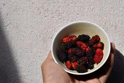 Calorie-arme moerbeibessen