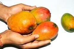 Mango: nationale vrucht van de Philippijnen en India