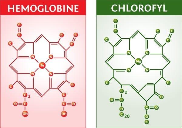 Heme - Chlorophyll