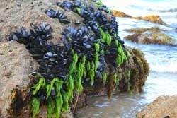 Zeewateren Nieuw-zeeland