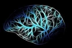 Citicoline voorloper van acetylcholine in de hersenen