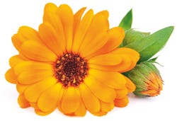 Marigoldbloem